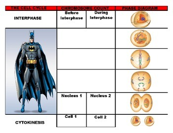 Mitosis Flipchart Notes (PDF)