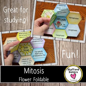 Mitosis Foldable