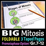 Mitosis Foldable - Big Foldable for Interactive Notebooks or Binders