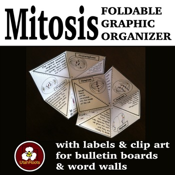 Mitosis Foldable Graphic Organizer with Clip Art and Word Wall Labels