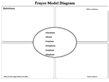 Mitosis Frayer Model Notes