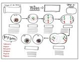 Mitosis Graphic Organizer