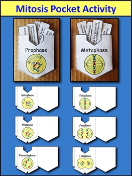 Mitosis Interactive Notebook - Three Hands On Activities for INB