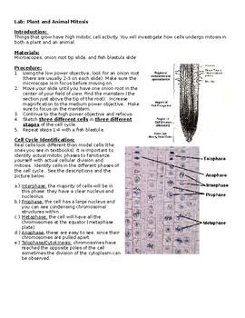 Mitosis Lab Onion Root and Fish Blastula