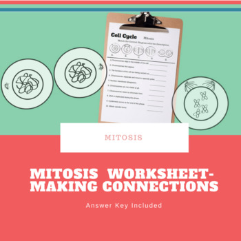 Mitosis Matching Worksheet with Images