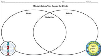 Venn Diagram Between Mitosis And Meiosis - Aflam-Neeeak
