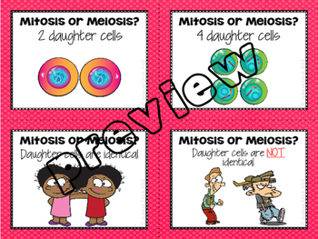 Mitosis & Meiosis Flash Cards
