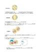 Mitosis - Mitosis and Cytokinesis notes