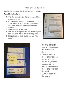 Mitosis Notes Worksheet with Graphic Organizer