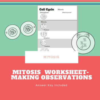 Mitosis Observation Sheet