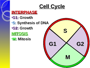 Mitosis Overview