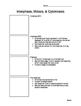 Mitosis Packet