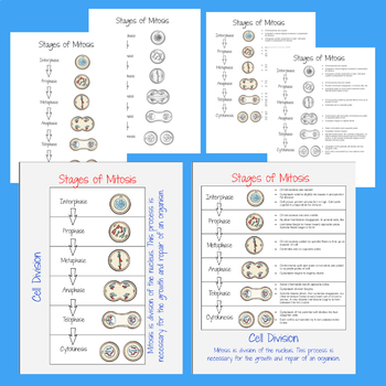 Mitosis Posters and Handouts