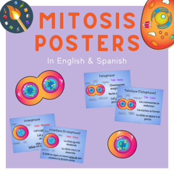 Mitosis Posters in English and Spanish