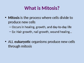 Mitosis Power Point Presentation
