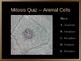 Mitosis PowerPoint Quiz
