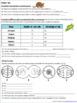 Mitosis Practice- Homework or Classwork