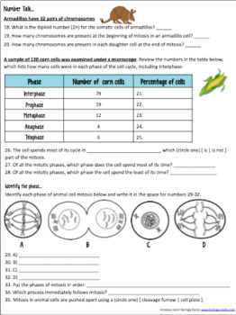 mitosis practice worksheet geersc. Black Bedroom Furniture Sets. Home Design Ideas