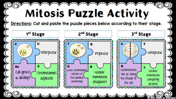 Mitosis Puzzle Activity in Google Slides by Math in Demand ...