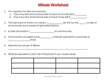 Worksheet 39 Mitosis Sequencing Answers - Nidecmege