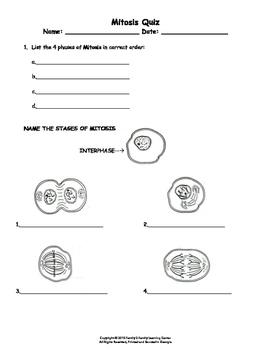 Mitosis Quiz