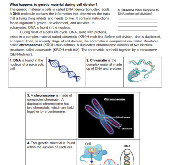 Mitosis Reading and Review Packet -- 9 page Mitosis Packet