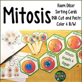 Mitosis: Room Decor, Card Sort, Word Wall, INB: Honeycomb Pattern