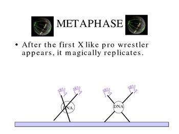 Mitosis Story