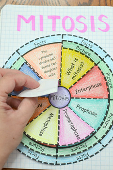 Mitosis Wheel Foldable