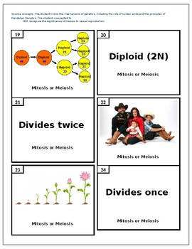 Mitosis Vs. Meiosis Review Activity