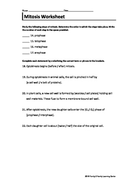 Mitosis Worksheet #3