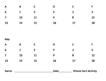 Mitosis and Cell Cycle Card Sort Activity (Cards, Mat, and Key)