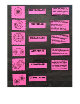 Mitosis and Cell Cycle Card Sort (Task Cards/ Matching Activity)