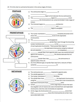 Mitosis and the Cell Cycle Interactive PowerPoint With Notes {Editable}