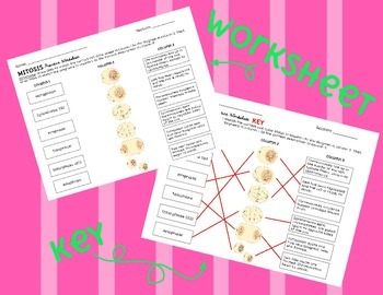 Mitosis and Cell Cycle Practice Worksheet