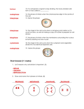Mitosis and Cell Cycle Quiz
