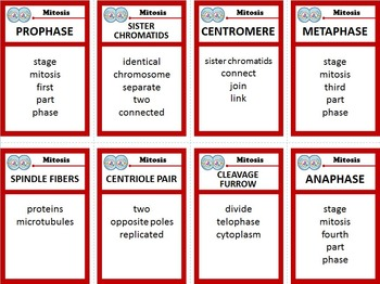 Mitosis and Cell Cycle Taboo Game - 32 Cards {With Editable Template}