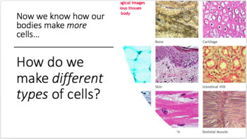 Mitosis and Cell Differentiation: PPT Notes