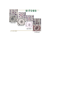 Mitosis and Cytokinesis Notes-shell / guided notes