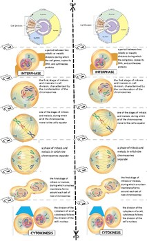 Mitosis and Cytokinesis cell labeling KEY
