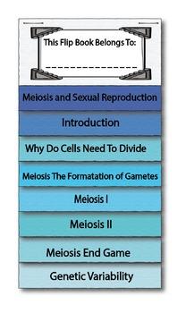 Mitosis and Meiosis BUNDLE