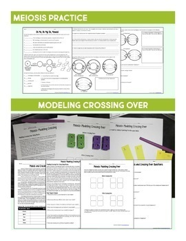 Cell Cycle Bundle- Mitosis and Meiosis