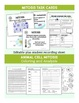 Cell Division- Mitosis and Meiosis Bundle
