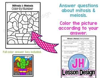 Mitosis and Meiosis Color-By-Number