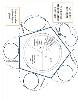 Mitosis and Meiosis Foldable Bundle