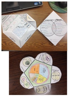 Mitosis and Meiosis Foldable Bundle