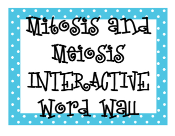 Mitosis and Meiosis INTERACTIVE Word Wall