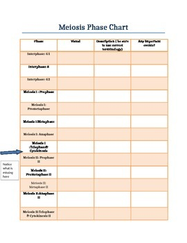 Mitosis and Meiosis Phase Charts