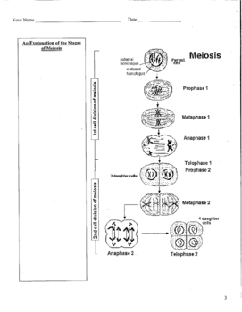 Mitosis and Meiosis Review Activity
