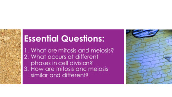 Mitosis and Meiosis - Supplemental Lesson - No Lab